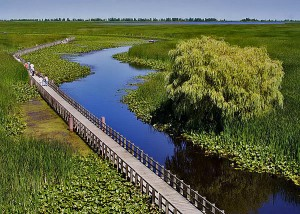 point-pelee-national-park-marsh